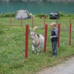 Мини зоопарк в кемпинге, Норвегия