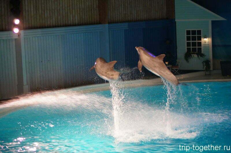Шоу дельфинов, включено в стоимость