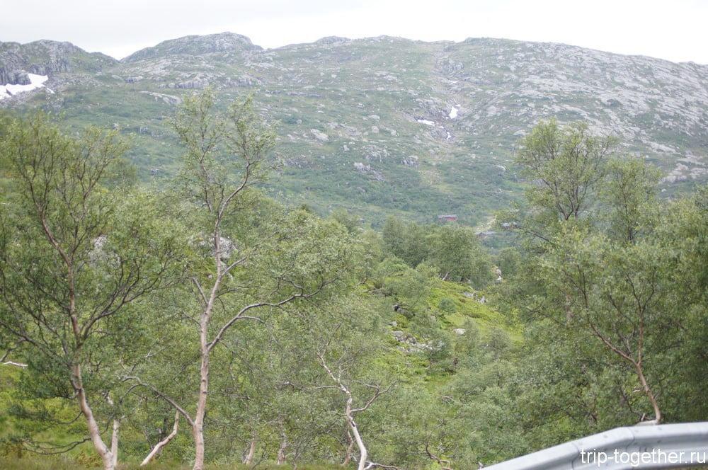 Карликовые деревья