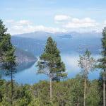 pine_trees_fijord
