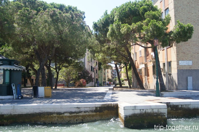 Кедры на островах Венеции
