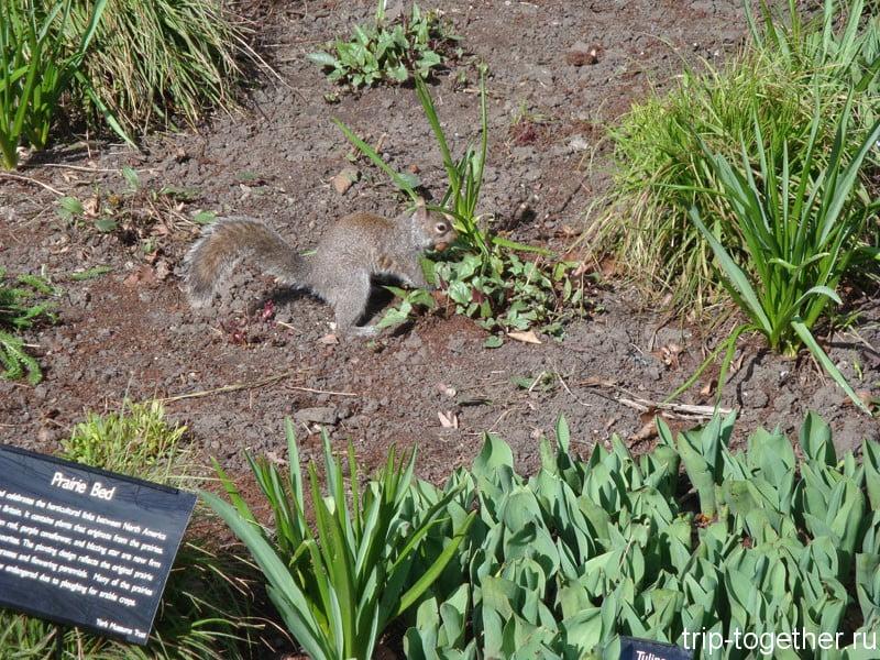 Йоркширская белка в York Museum Garden