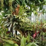 Растения субтропической оранжереи