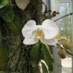 Оранжерея с орхидеями