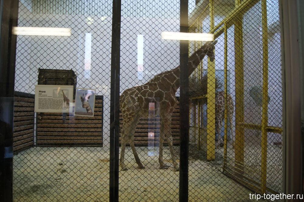 Зимний вольер жирафа в Ленинградском зоопарке