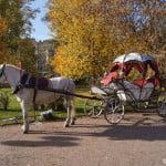 spbzoo-horse