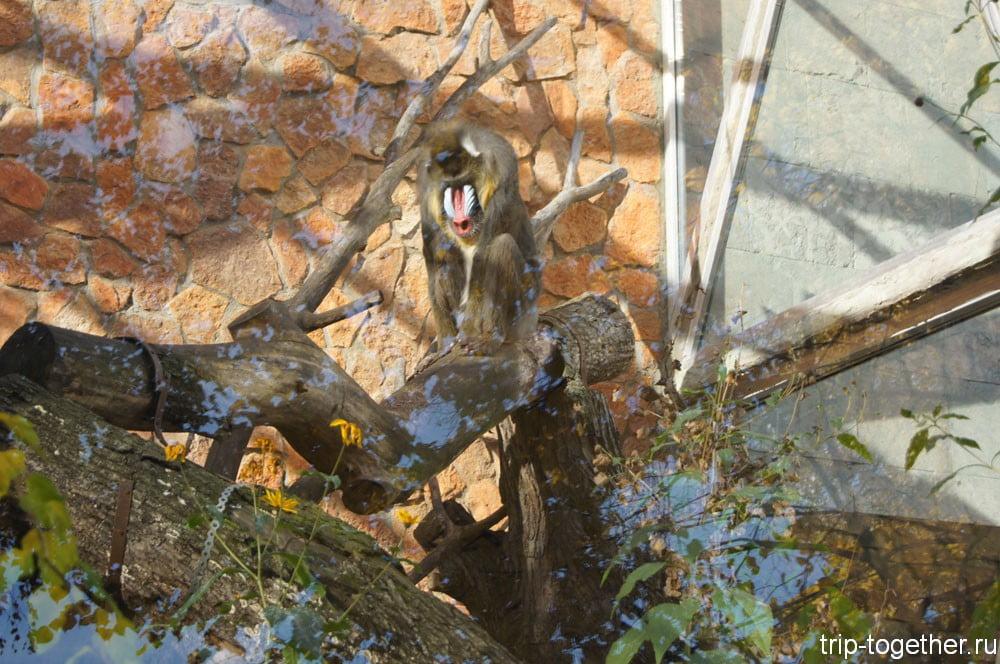 Обновленный вольер обезьян в Ленинградском зоопарке
