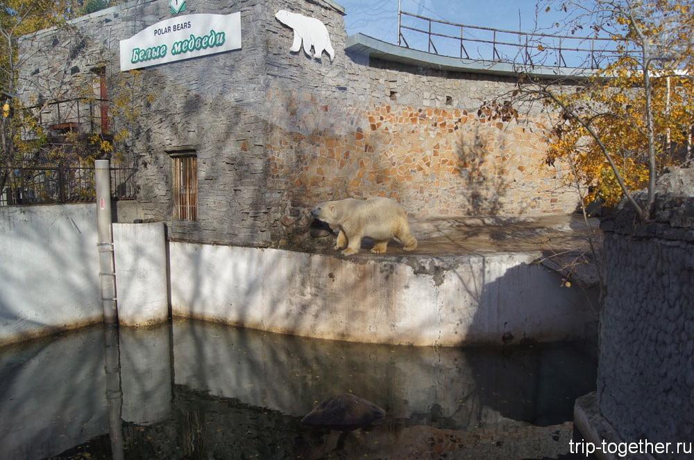 Вольер белого медведя в Ленинградском зоопарке