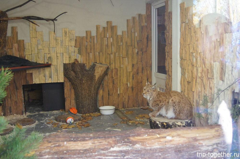 Обновленный вольер рыси в Ленинградском зоопарке