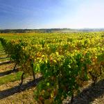 Виноградники Франции