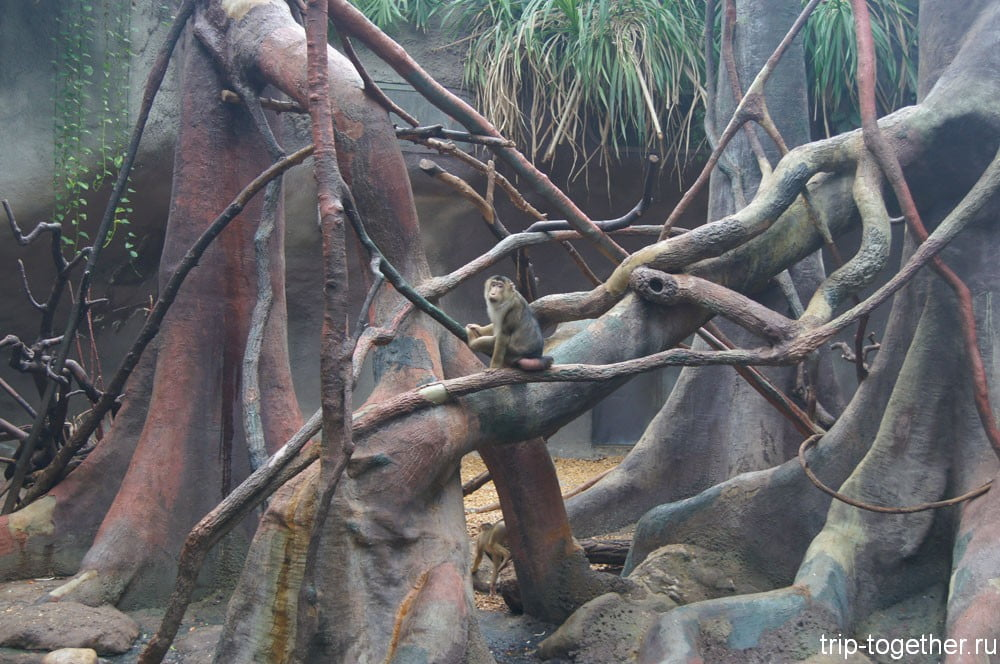 В вольере индонезийские тропики в пражском зоопарке