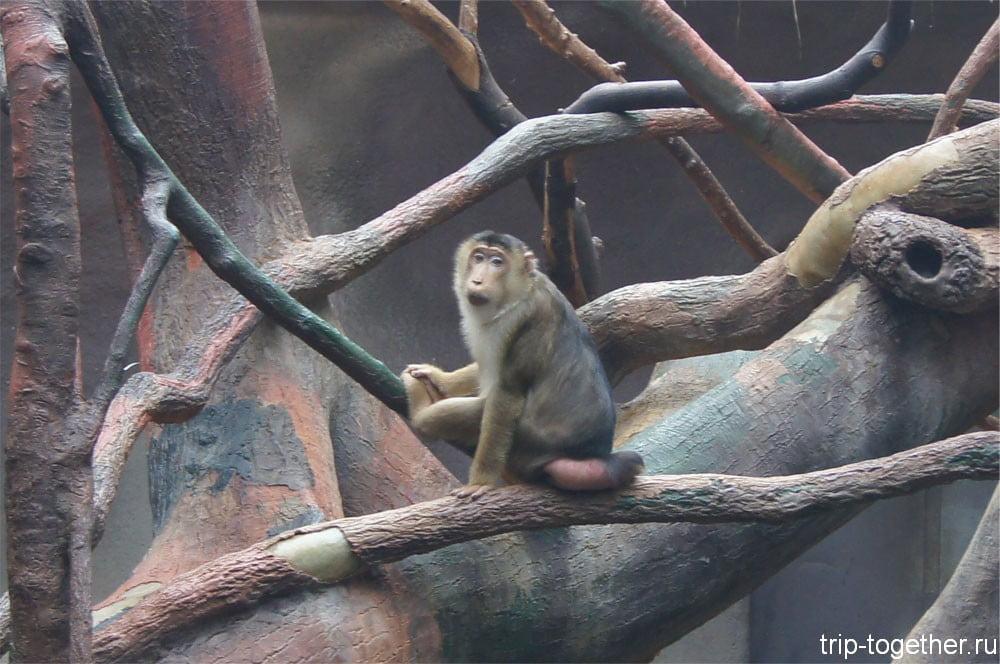 Обезьянка в вольере индонезийские джунгли