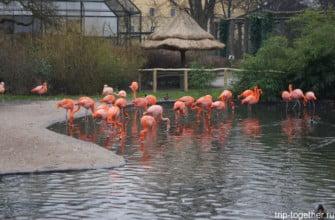 Фламинго в зоопарке Праги зимой