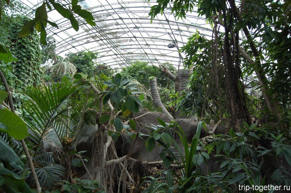 Вольер индонезийские джунгли