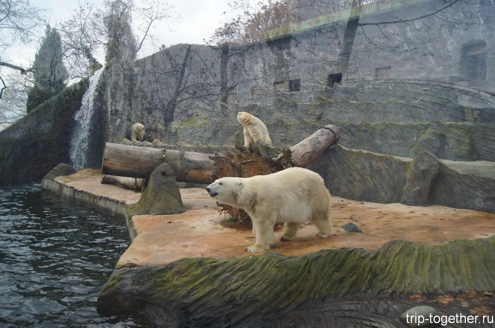 Белые медведи в Пражском зоопарке