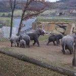 Слоны в зоопарке Праги