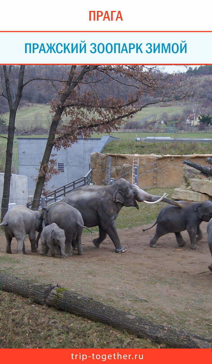 Пражский зоопарк зимой