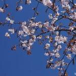 botanic_garden_spb15