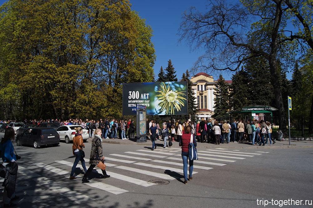 Ботанический сад Санкт-Петербурга - цветение сакуры