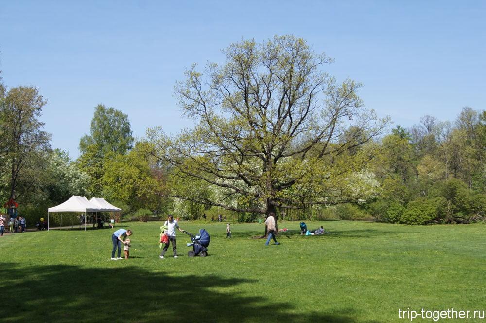 Большая часть парка выглядит так