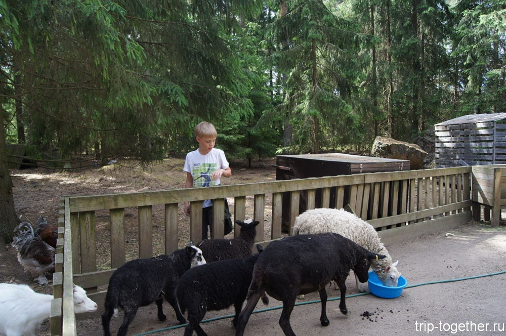 Зоопарк Финляндия