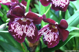 Орхидеи в ботаническом саду Петербурга