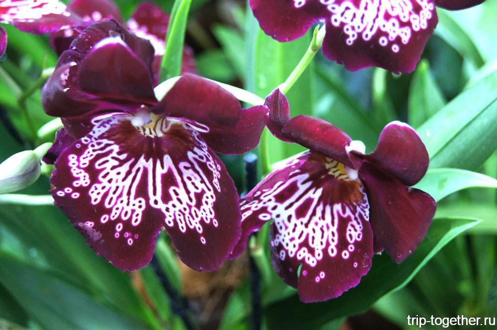 Выставка орхидей и бромелий «Осколки радуги»