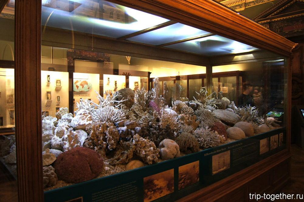 Музей естественной истории в Вене