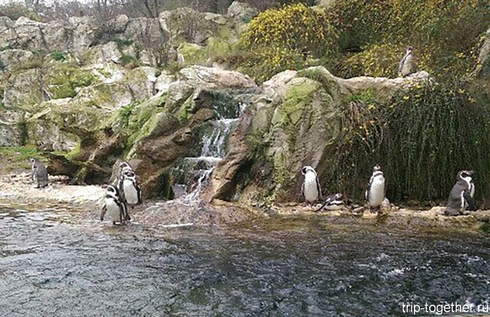 Зоопарк в Вене