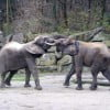Зоопарк в Вене. Слоны