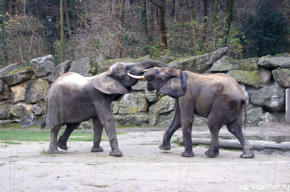 Зоопарк в Вене - Шёнбрунн