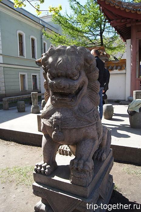 Сакура в китайском саду на Литейном проспекте