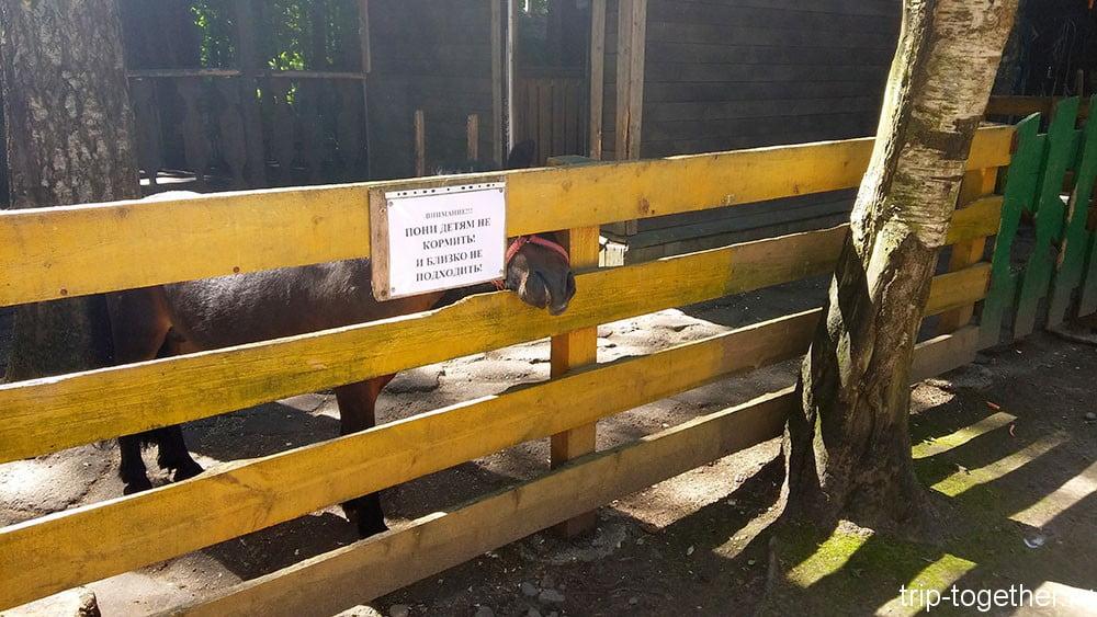 Злобный пони в зоопарке Радуга Зеленогорска