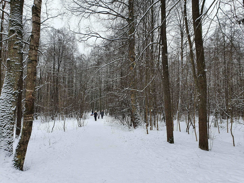 Аллея в Шуваловском парке, зима