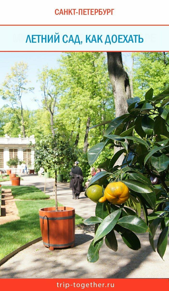 Летний сад в Санкт-Петербурге - цитрусовые