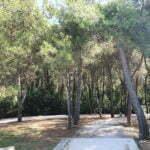 Лес рядом с пляжем Куви