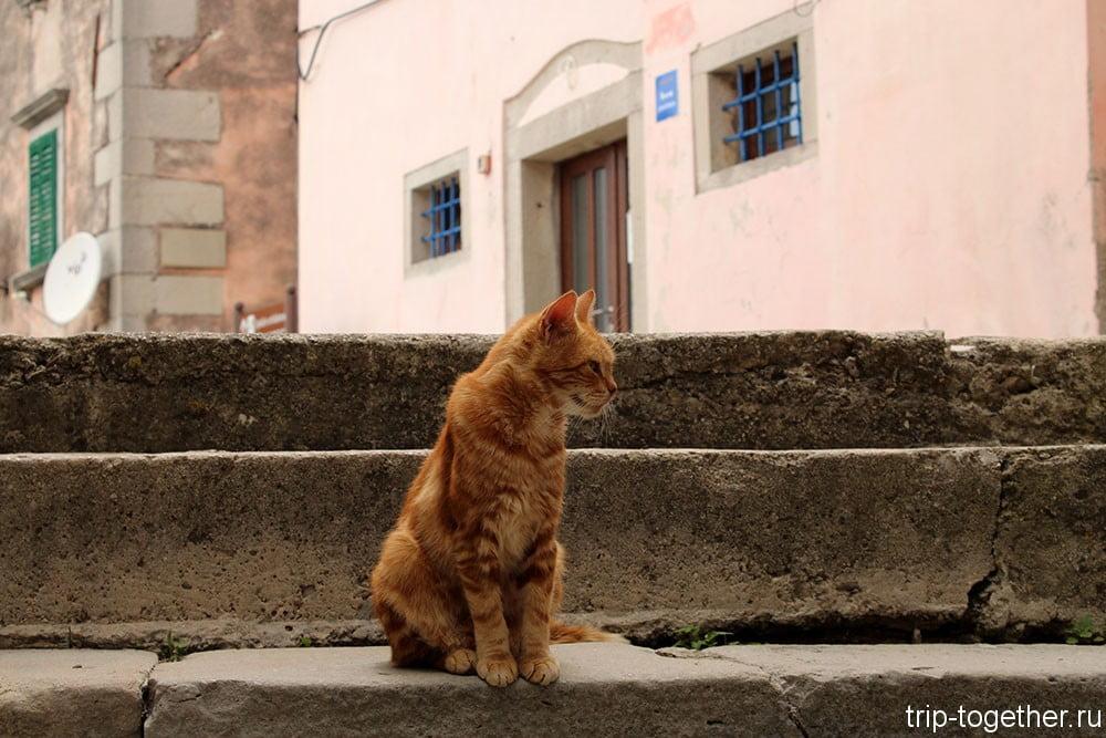 Истрийский котик