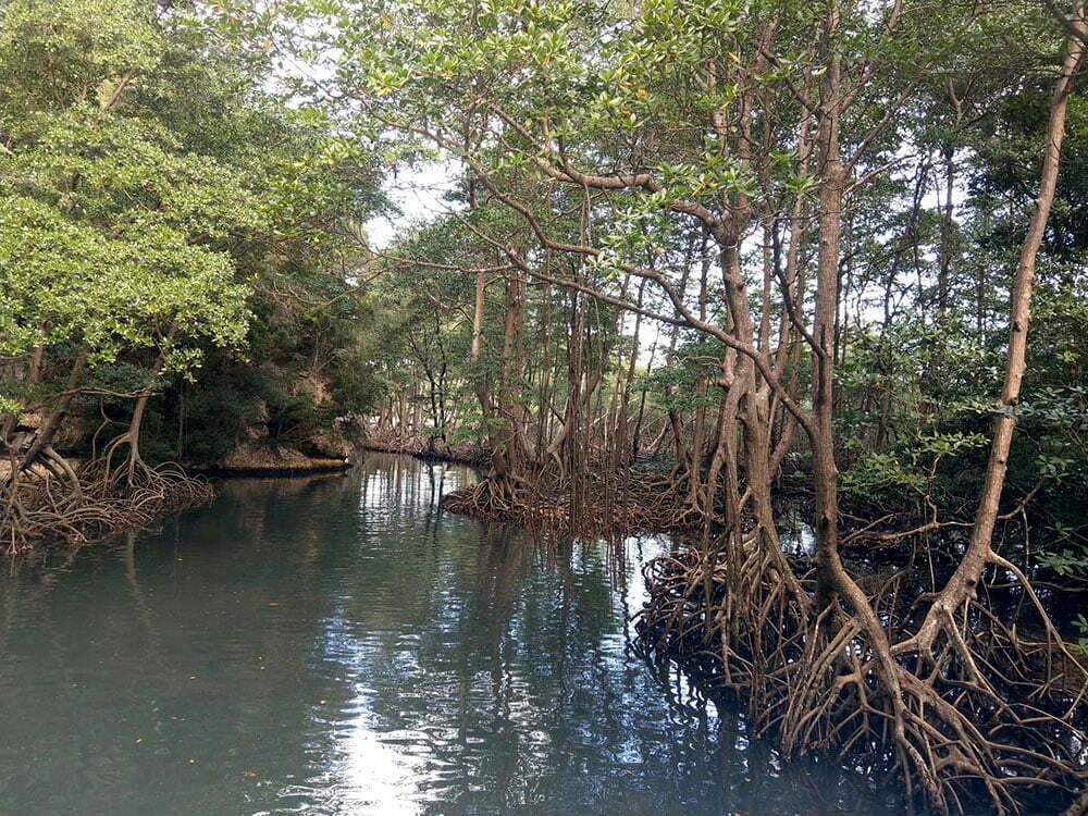 Мангровые заросли из Пиратов Карибского моря. Доминикана.