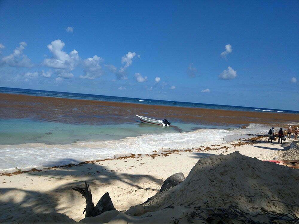 Водоросли в Доминикане