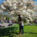 Кёкенхоф - очень красивое дерево