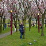 Цветущие деревья у музея Ван Гога