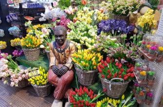 Тюльпаны на Цветочном рынке Амстердама
