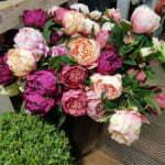 Искусственные пионы на цветочном рынке в Амстердаме