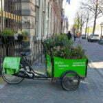Зеленый велосипед, Лейден