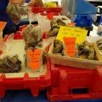 Устрицы. Рыбный рынок. Роттердам.