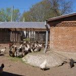 Староладожский Успенский женский монастырь - птичник