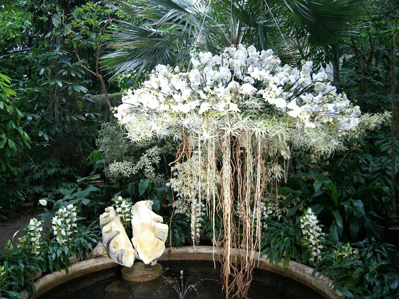 Ботанический сад Петербурга, цветущие орхидеи