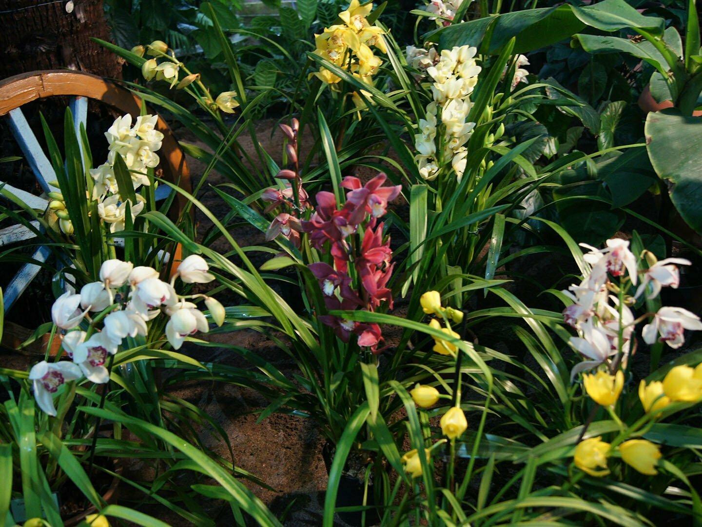 Орхидеи на выставке в Санкт-Петербурге