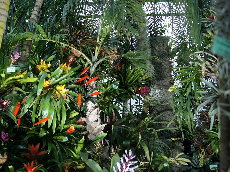 Выставка орхидей в Санкт-Петербурге