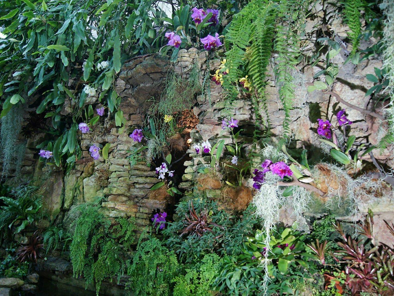 Орхидеи эпифитные растения